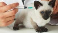 vacina-pet