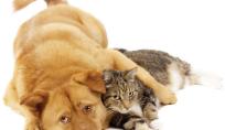 caes-gatos-pulgas-protecao